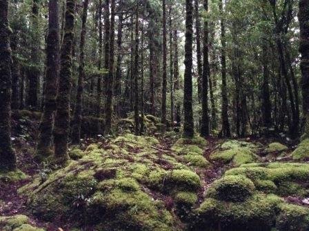 縄文杉への道にて
